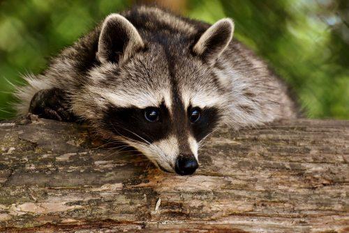 Protection des espèces protégées – le parc animalier pour inciter les enfants à y participer